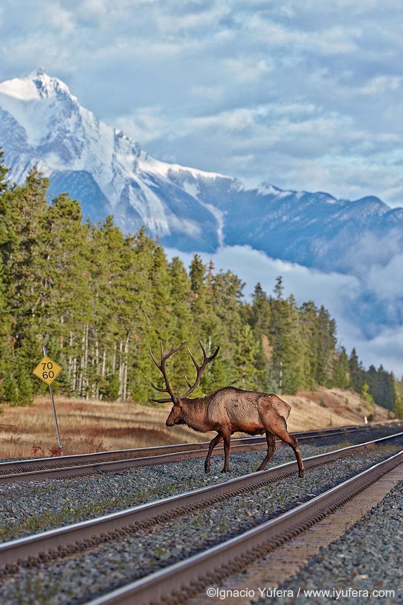 Bull Elk Railway