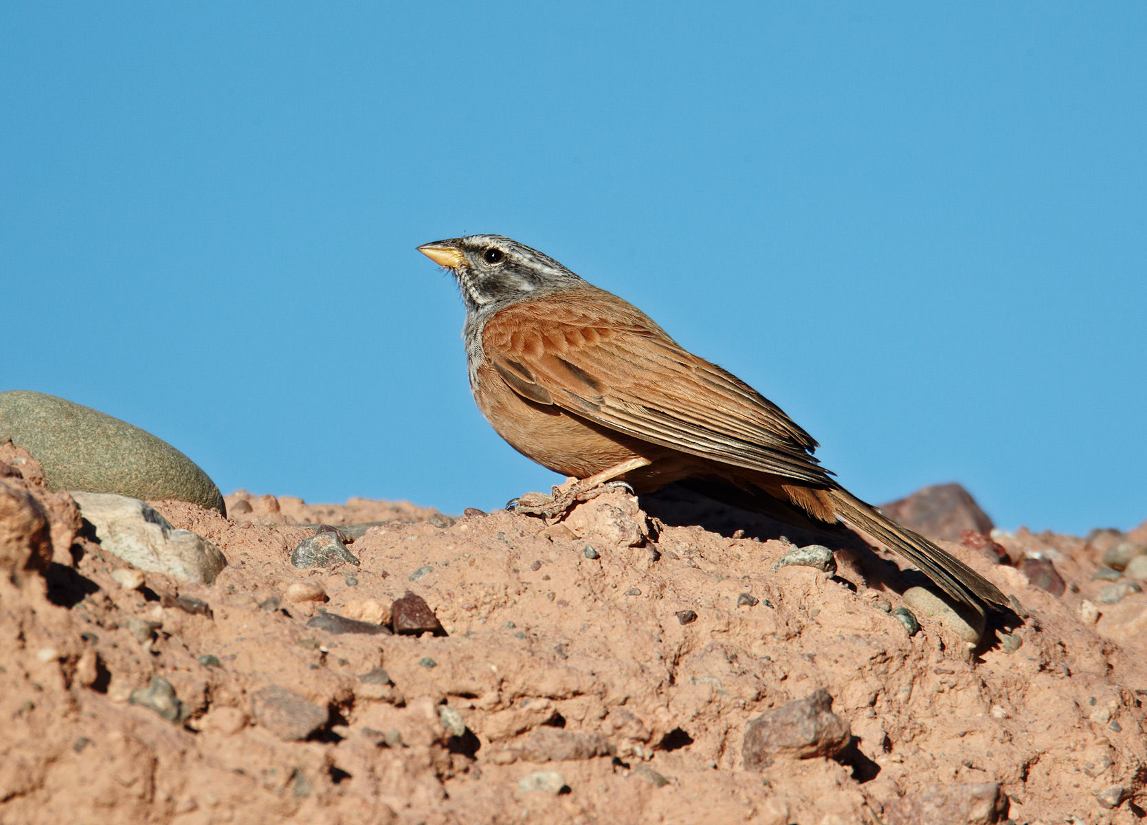 House Bunting