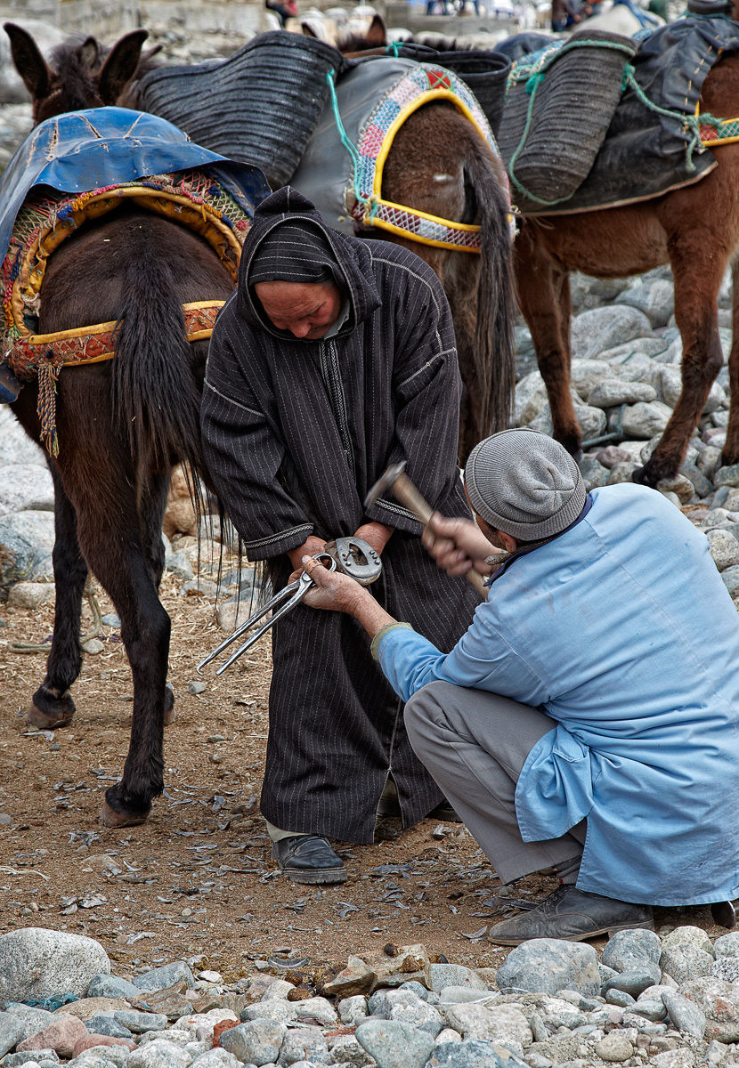 Moroccan Farrier